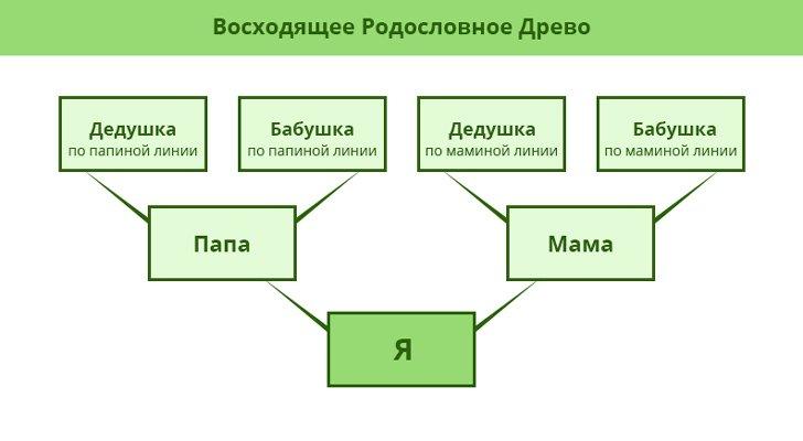 Как сделать генеалогическое дерево